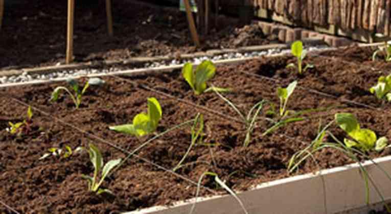 square foot gardening in een verhoogde bak